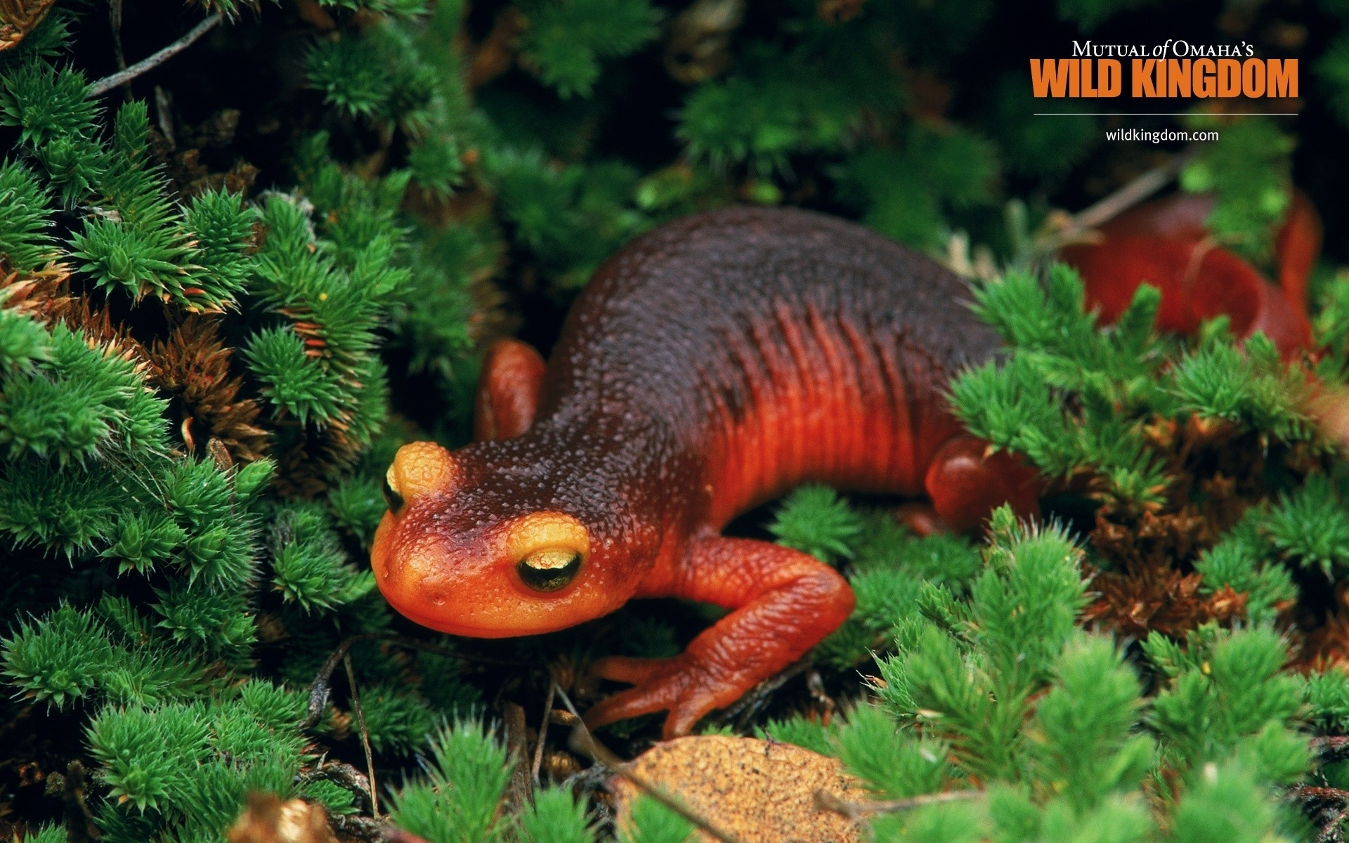 reptiles and frogs nature outdoors reptile tree wildlife wood horizontal biology salamander