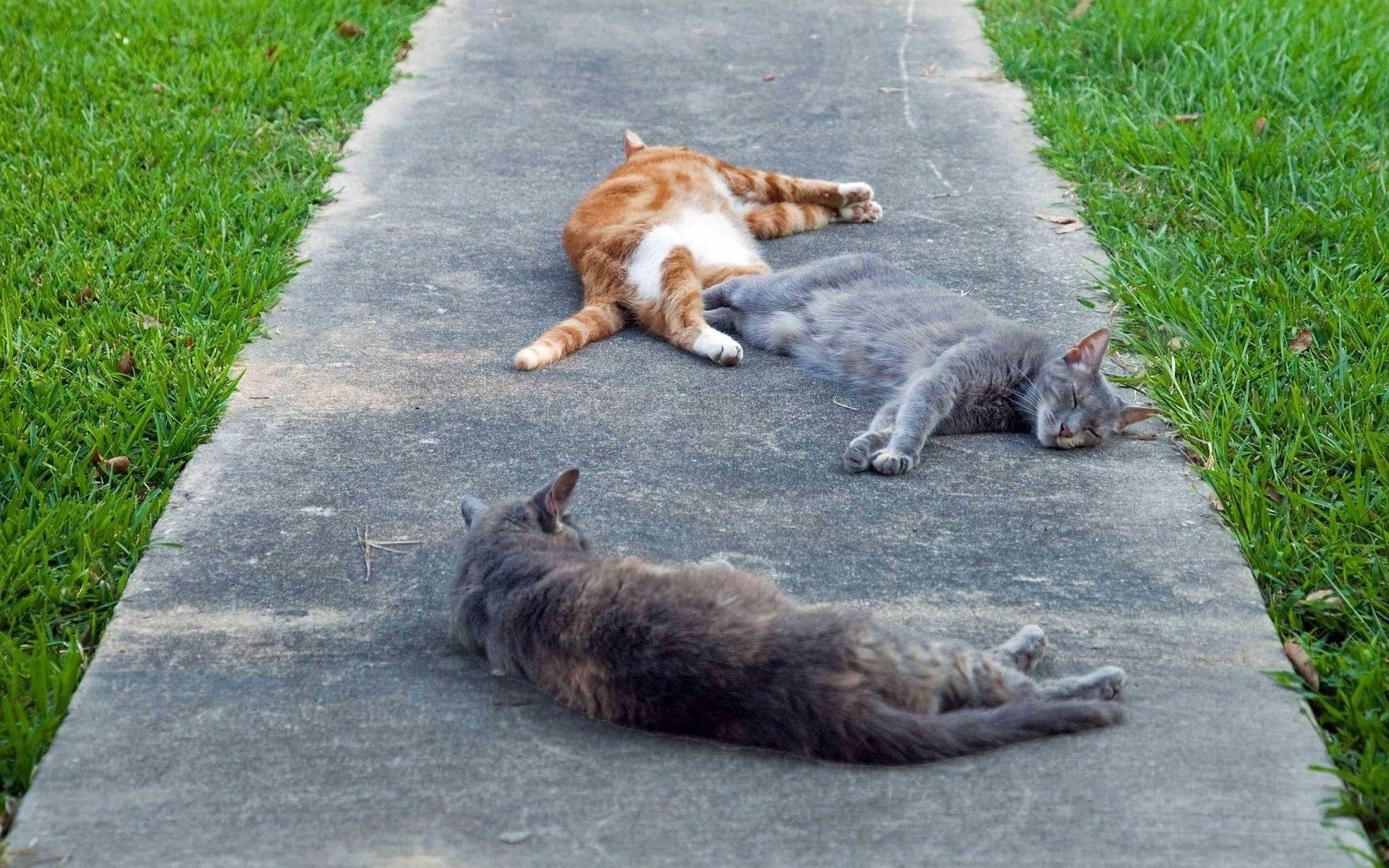 Лежащий кот  № 176253 без смс
