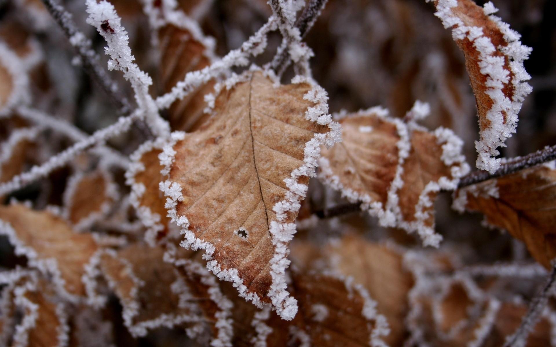 листья изморозь бесплатно