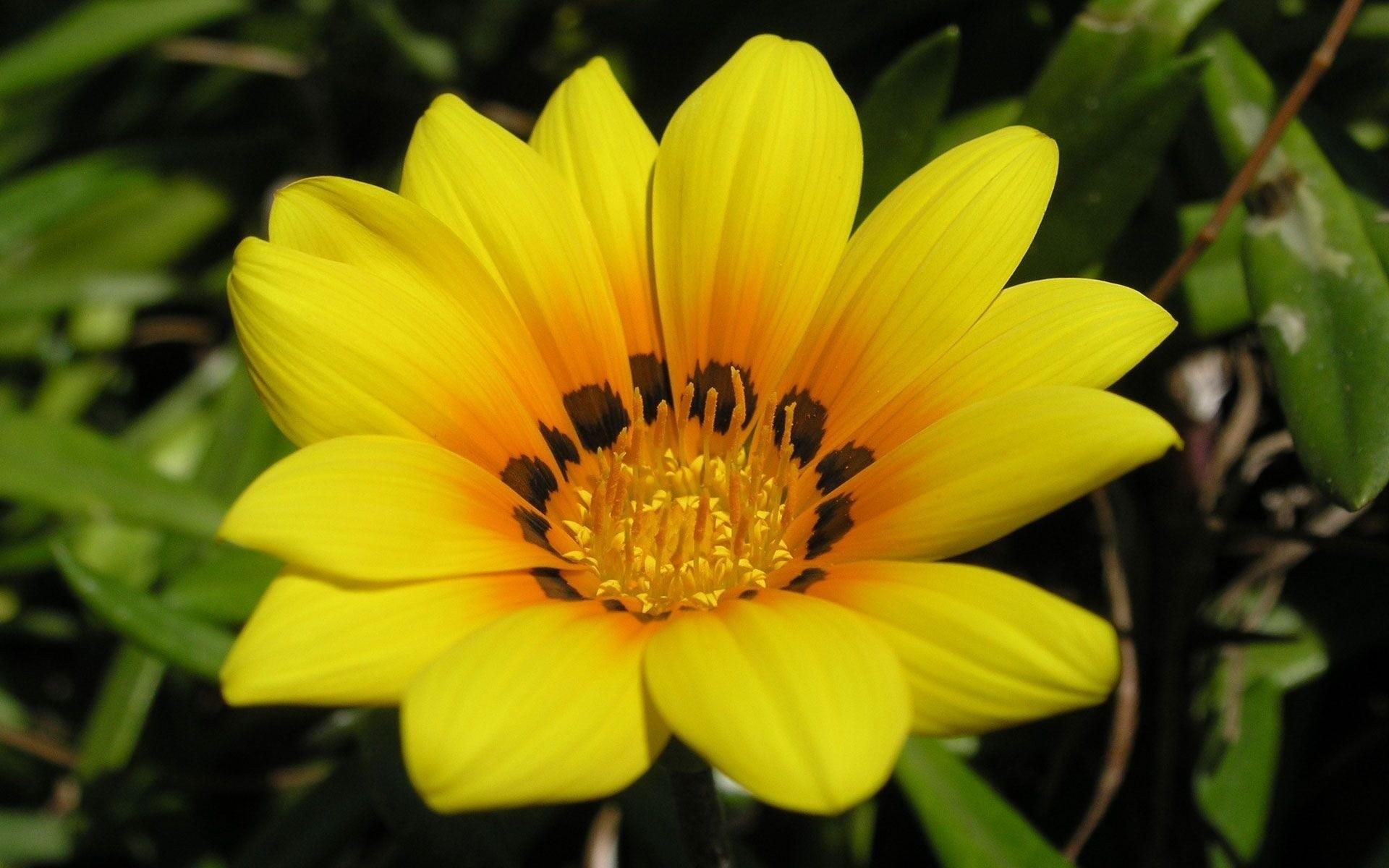 Beautiful Yellow Flower Phone Wallpapers