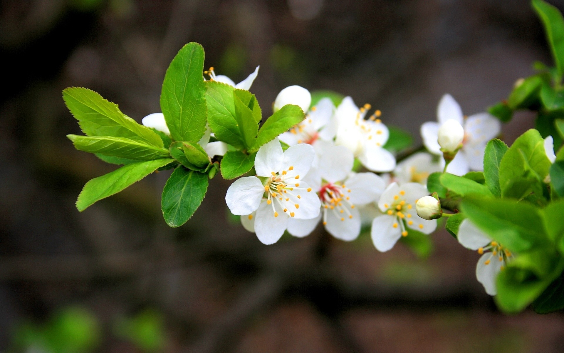 flowers nature flower leaf flora tree garden branch growth blooming season bud cherry outdoors close-up floral petal park apple summer
