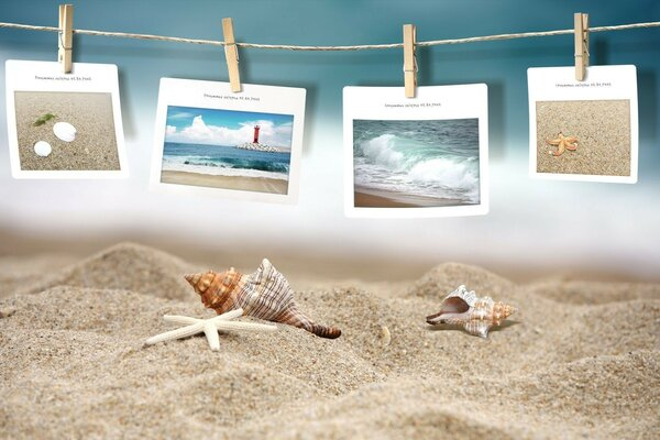 sand with shells and pictures of sea
