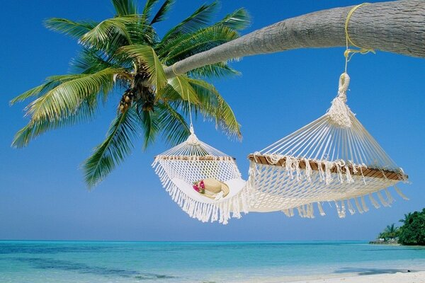 wicker hammock on a palm tree