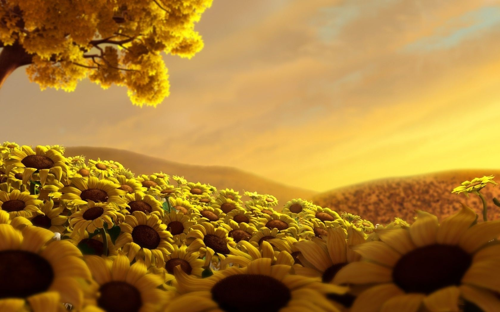Field Of Sunflowers In The Hills Desktop Wallpapers For Free