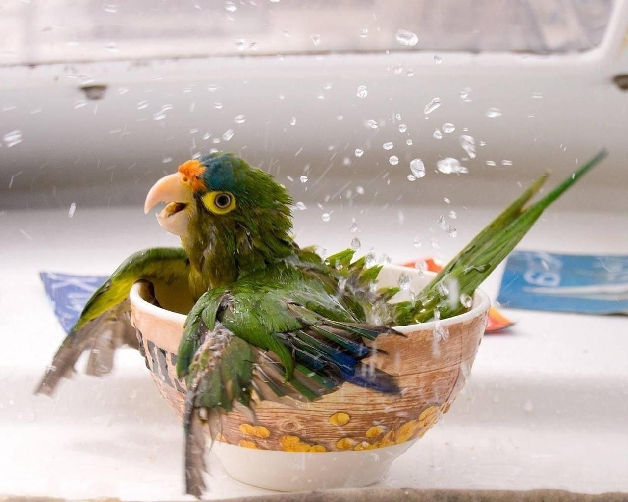 Wet in the parrot bowl