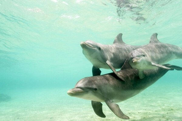 Dolphins in blue water