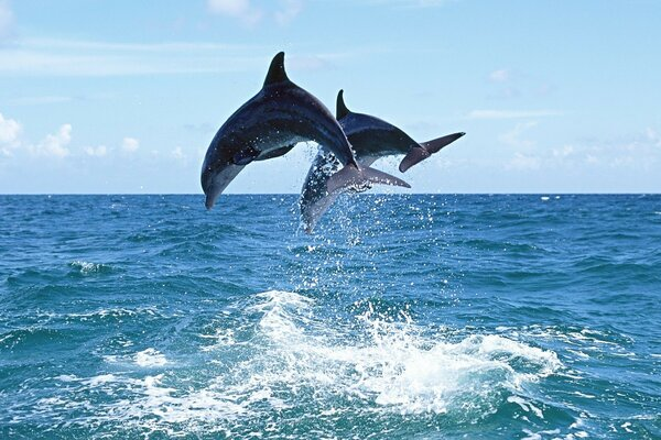 dolphins frolic
