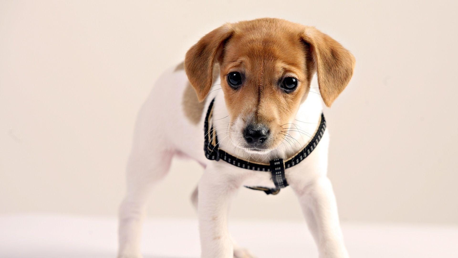 милые собаки  № 688029 без смс