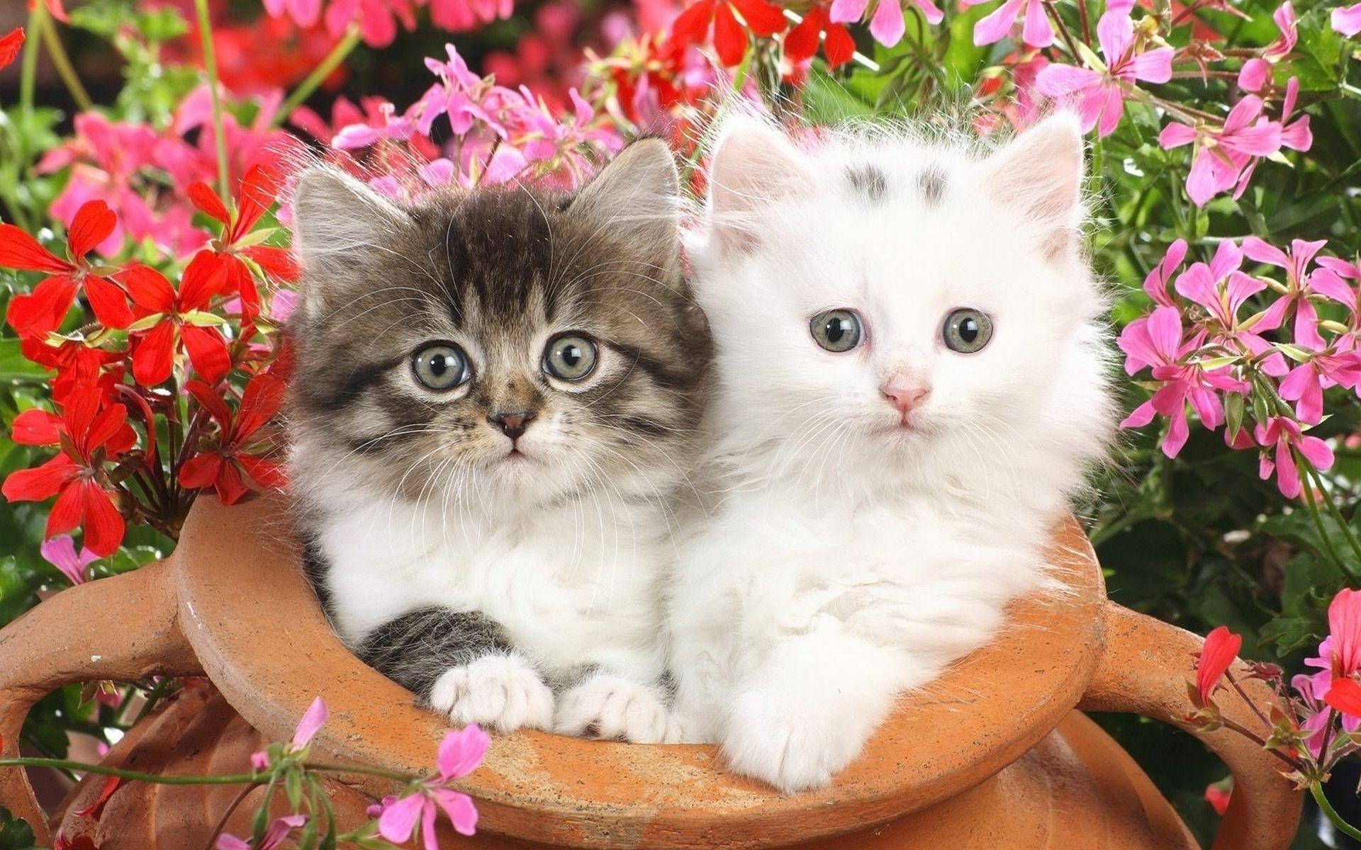 котята фото пушистые и красивые