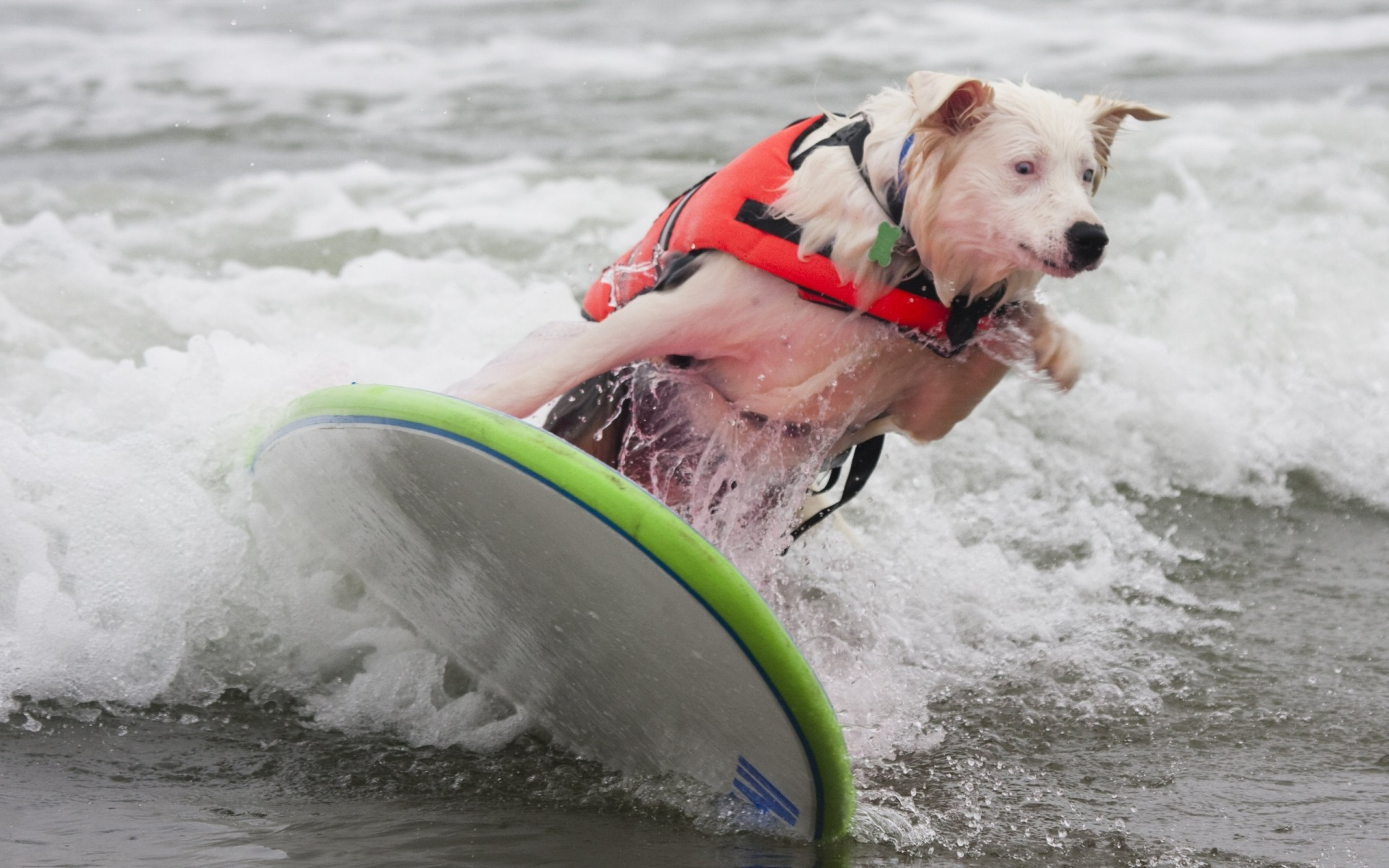 dogs water wet surf action water sports fun recreation splash beach one leisure sea competition ocean sports funny animals