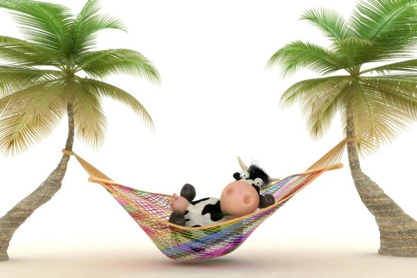 Cow relaxing in Hammock