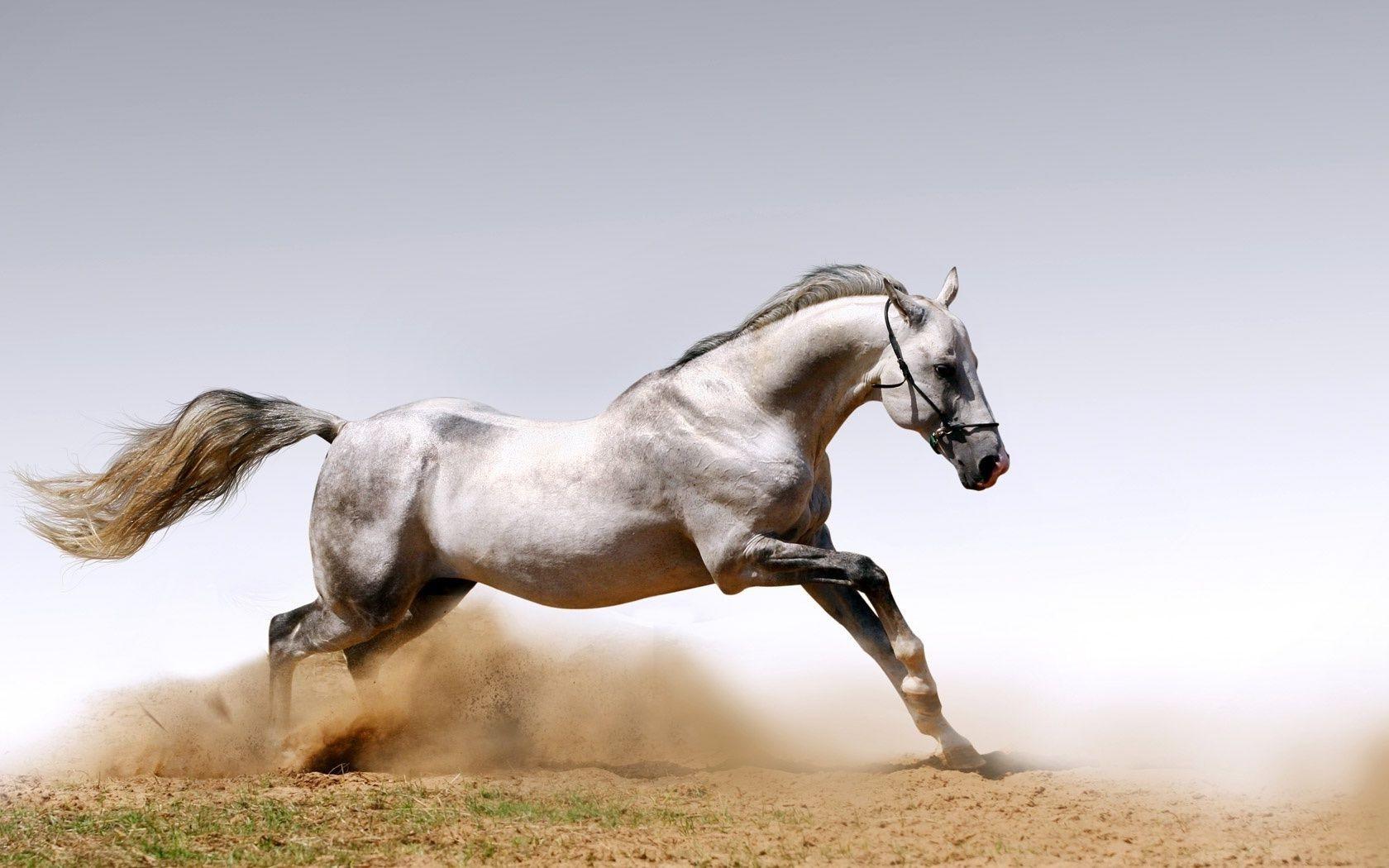Лошадь в цветах  № 3117227 загрузить