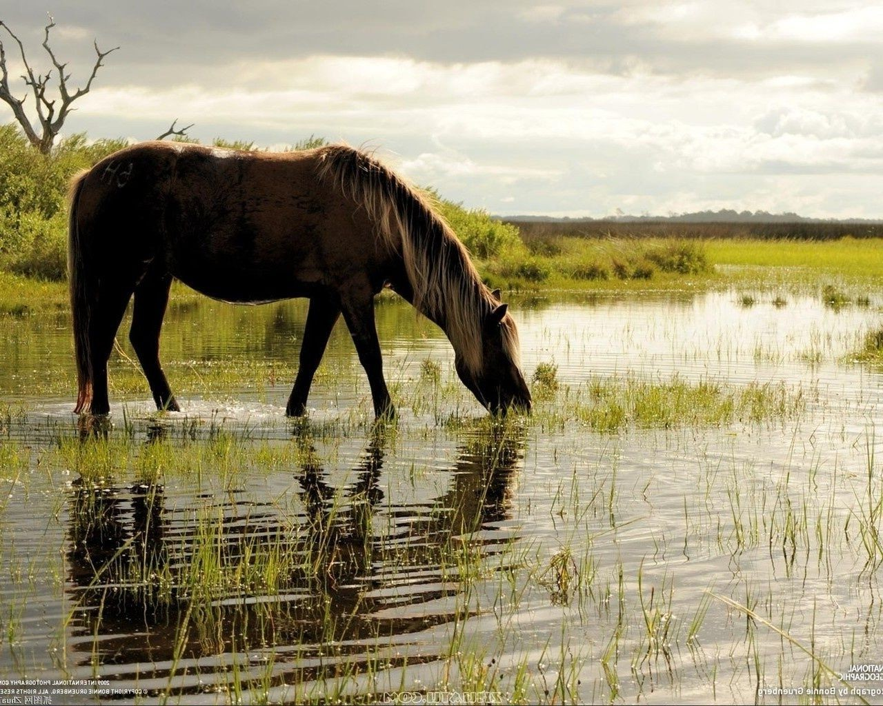 horses mammal animal grass cavalry horse wildlife mare equine water nature field outdoors hayfield mane stallion rural