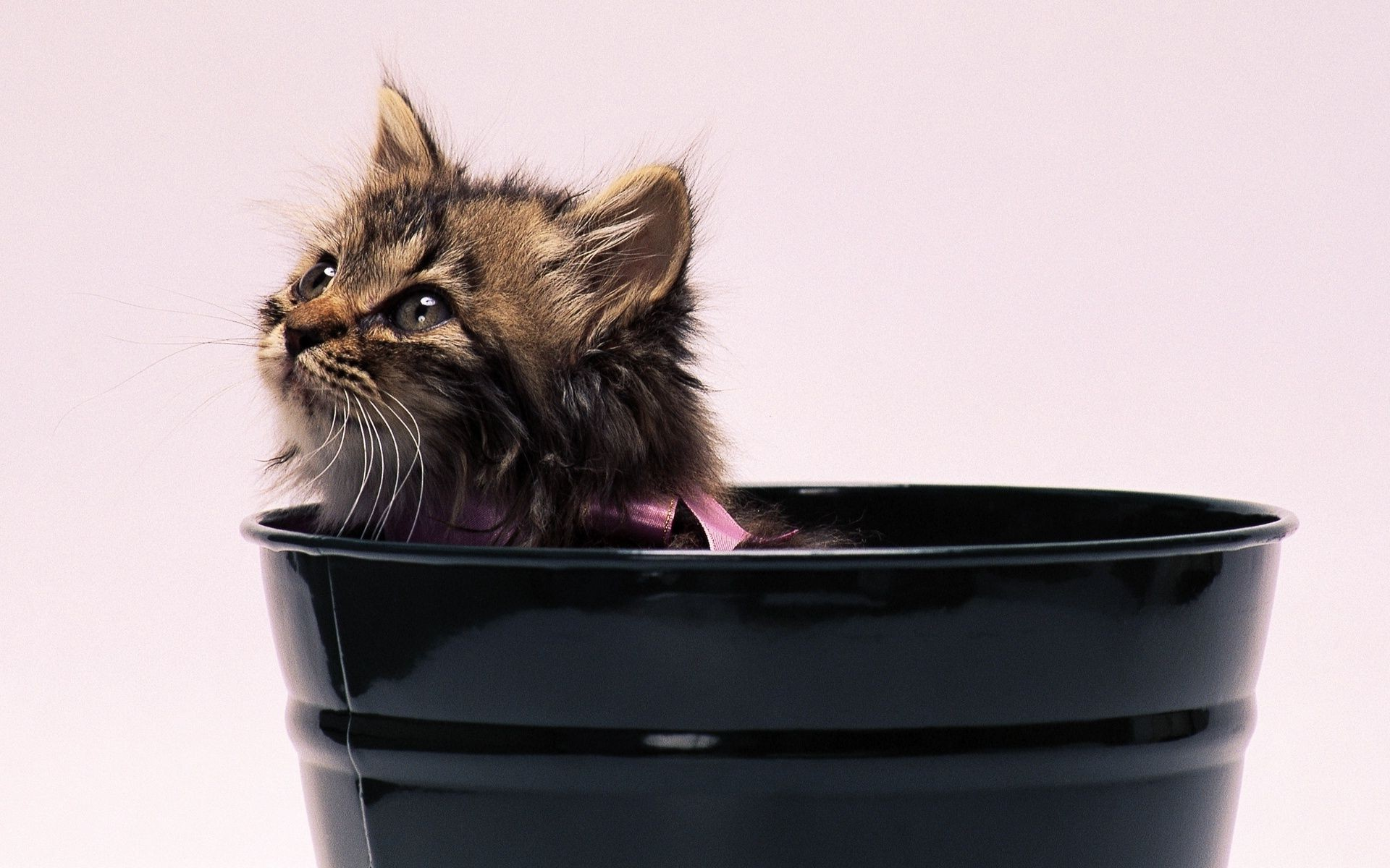 striped kitten emerges from a pot