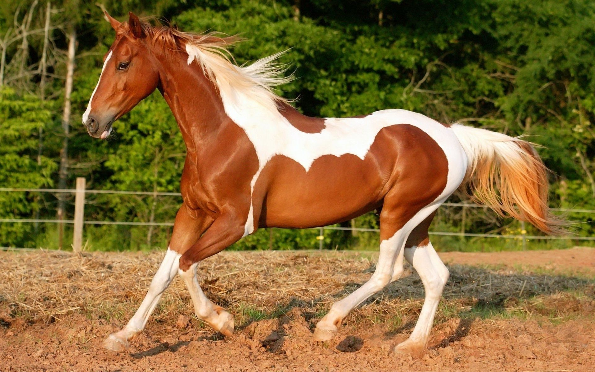 graceful horse with a shiny coat