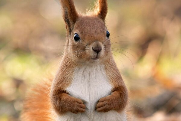 squirrel with a cute little face