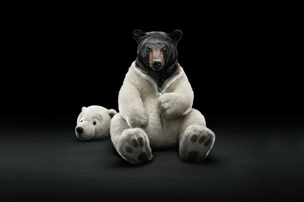 black bear in a costume of a polar bear
