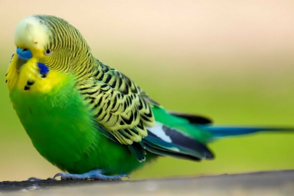 parrot green with blue beak