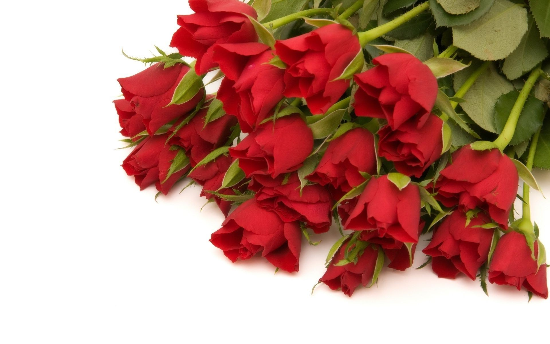 A bouquet of red roses on a white background