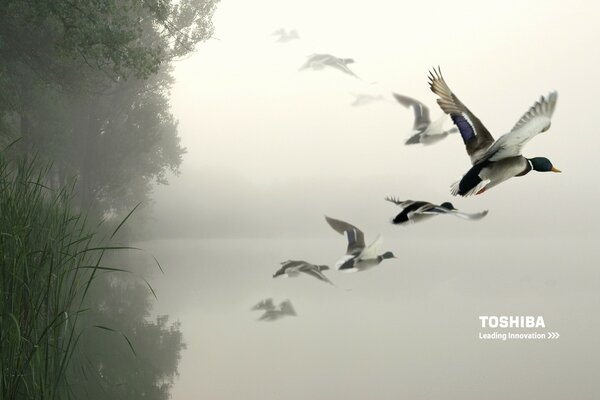 Toshiba birds in the air