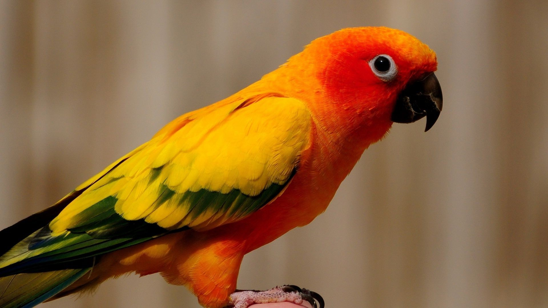 the yellow birds pdf free
