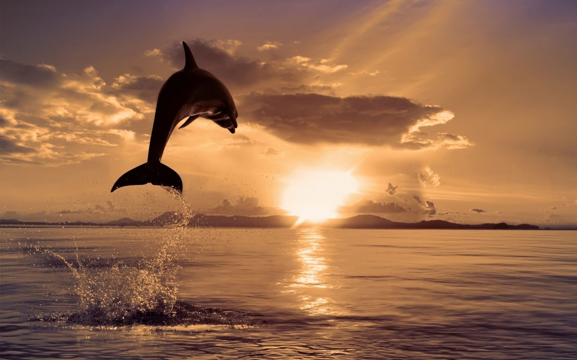 jumping Dolphin at sunset