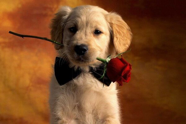 puppy with a rose in his teeth