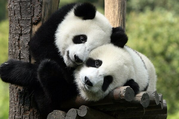 cute children hugging pandas