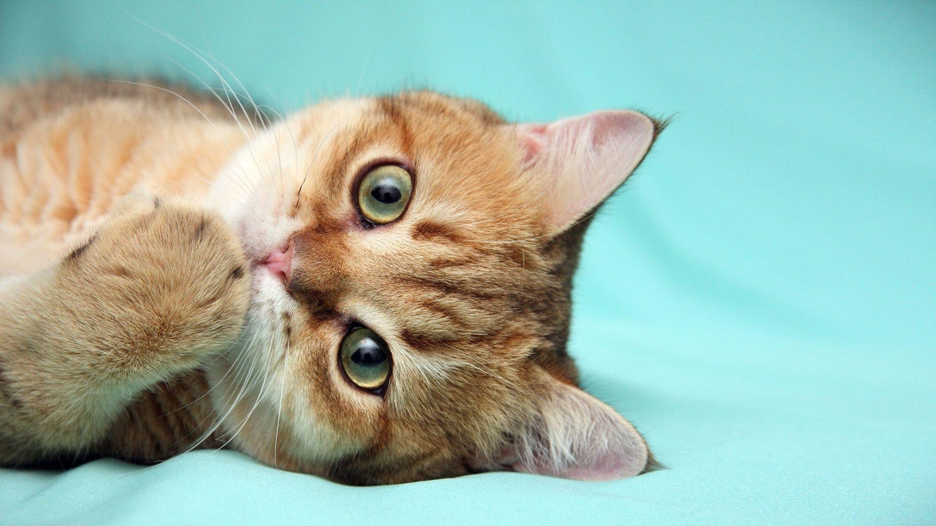 Облизывающийся кот  № 3088230 без смс