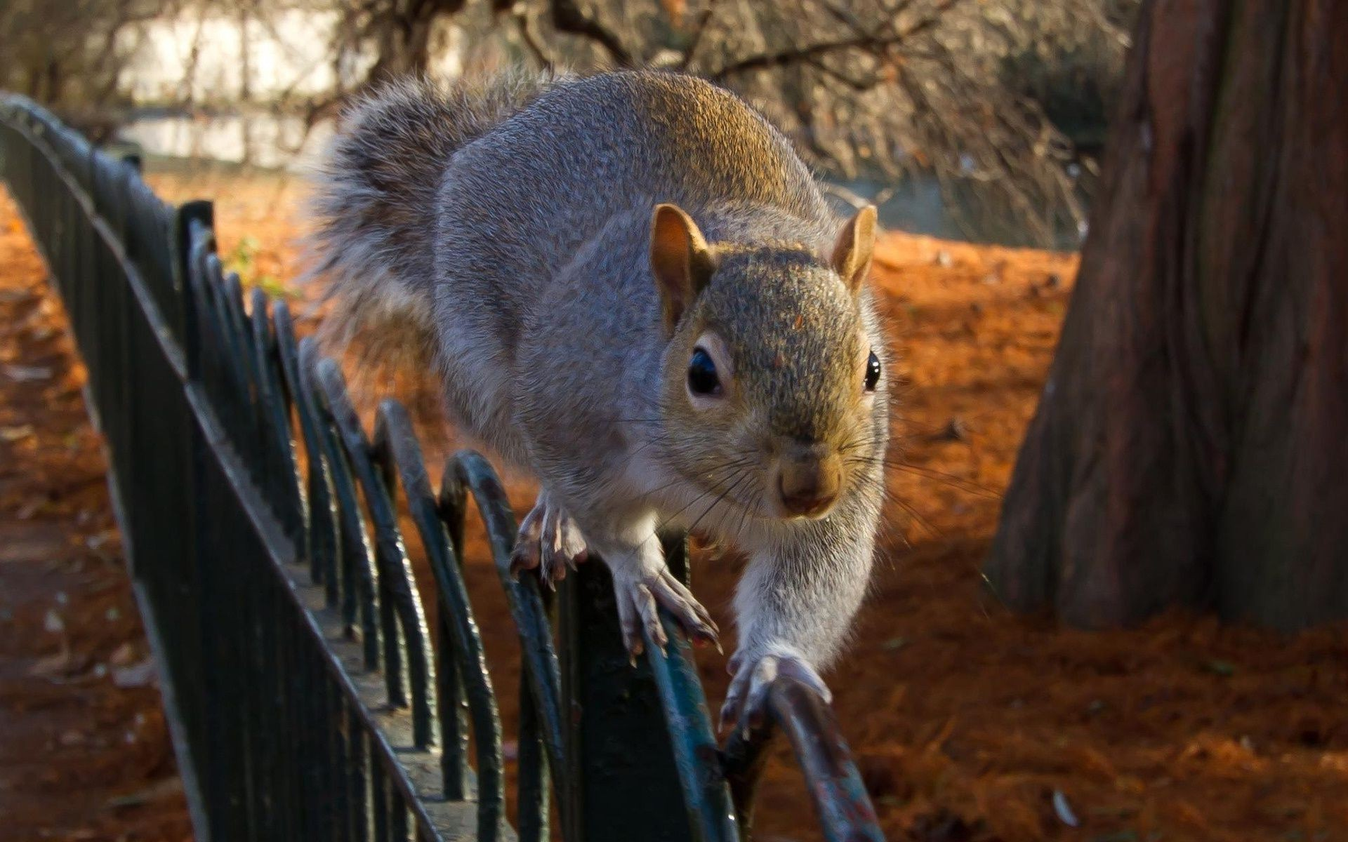 squirrel runs along the fence