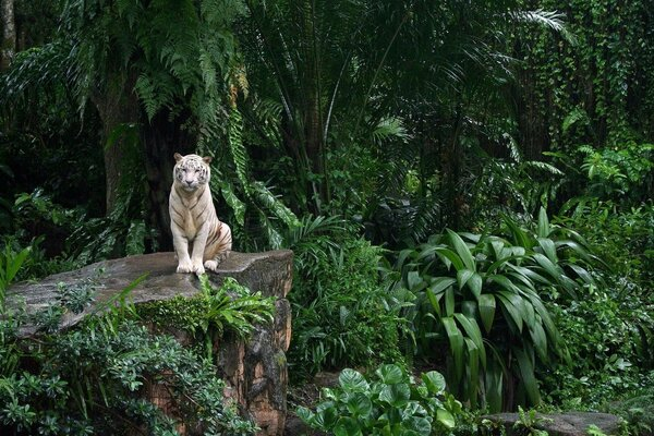 white tiger sitting in the jungle