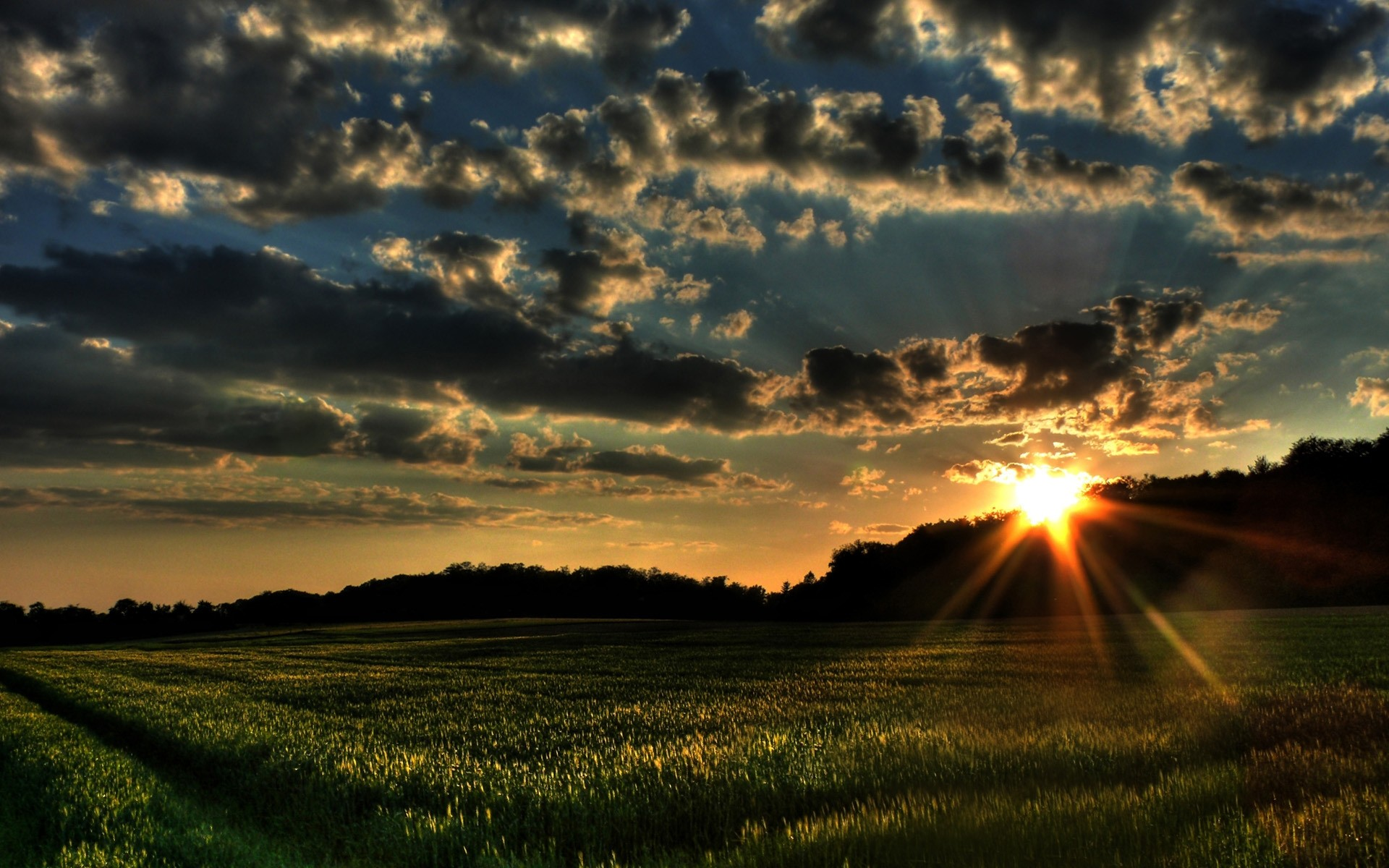 Laeacco Spring Flowers Field Sunset Grassland Scenic Photography