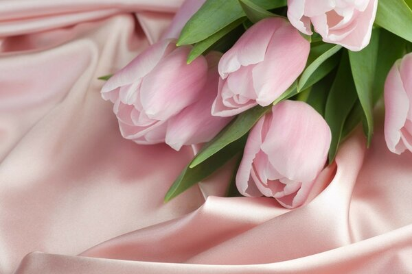 Creamy pink tulips on silk