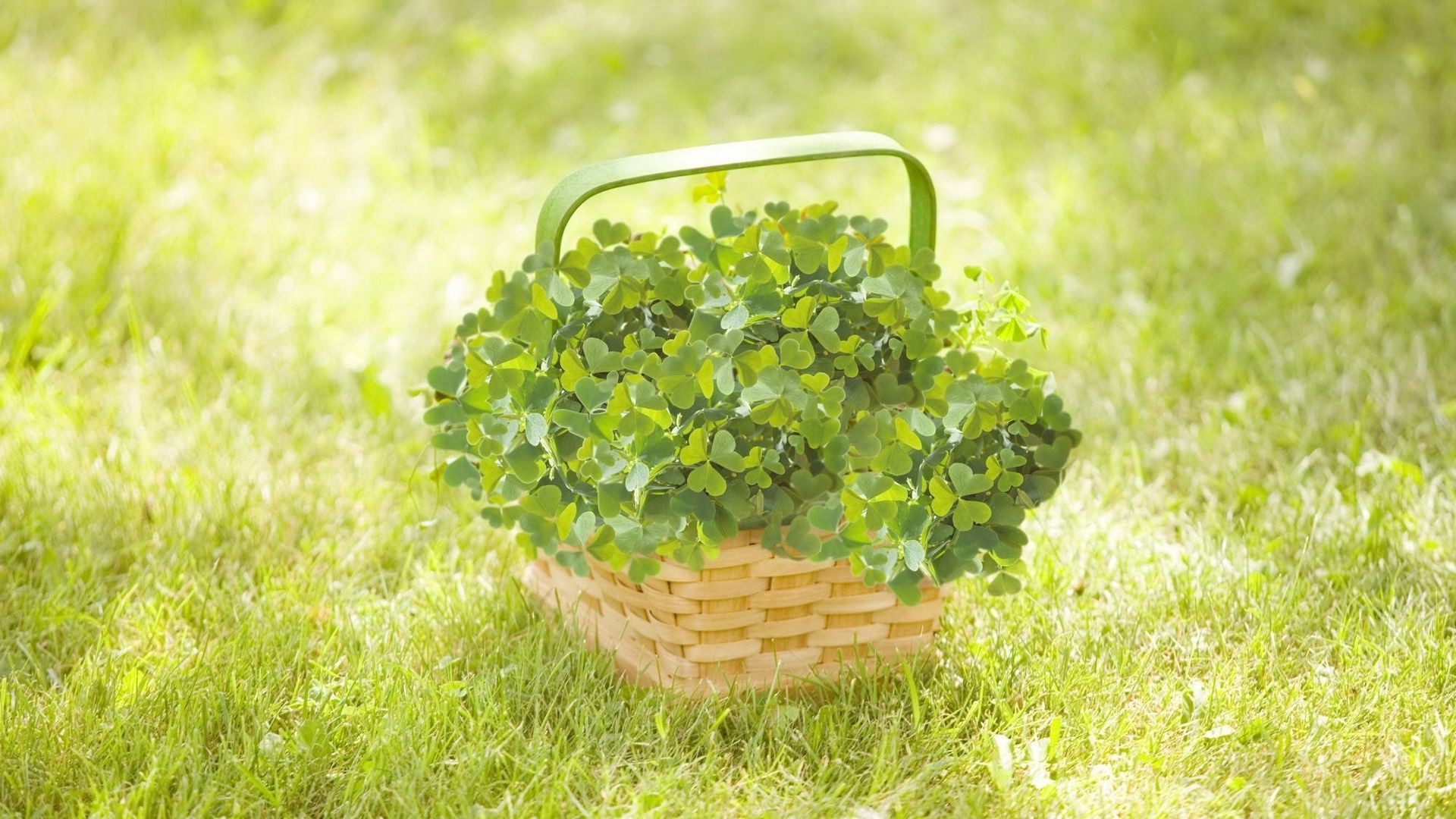 the basket on the grass with quatrefoil