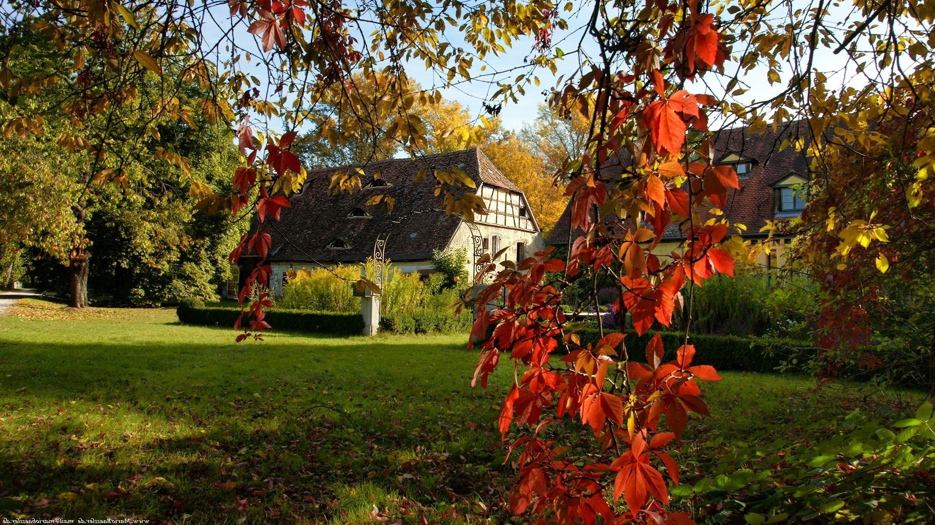 houses and cottages tree leaf fall season park garden outdoors nature branch color flower flora maple bright landscape