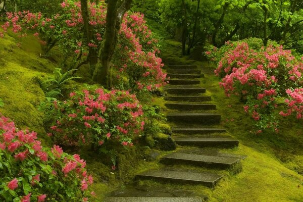 a stone staircase bushes flowers green grass
