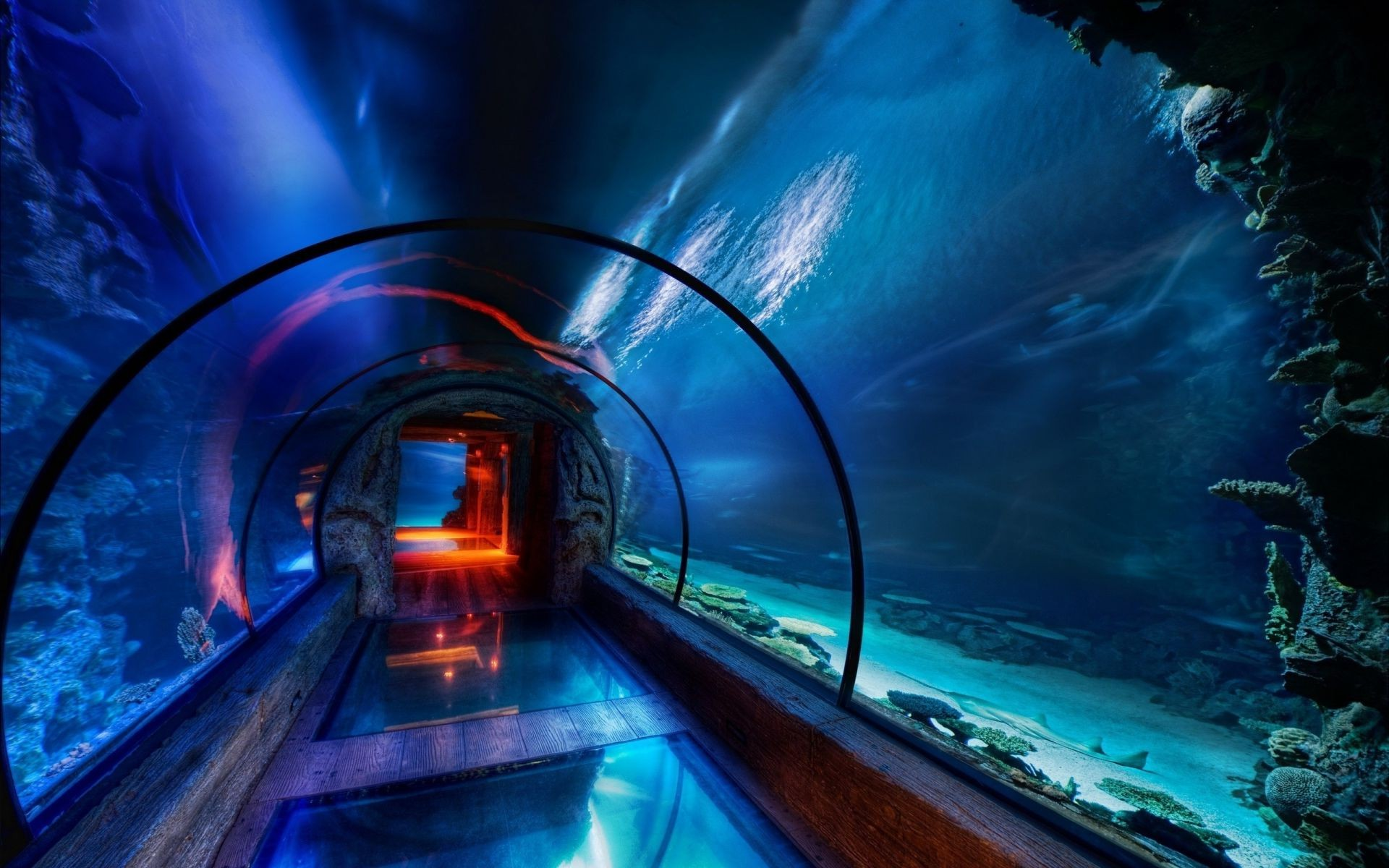 The water Park underwater beauty of the underwater world tunnel