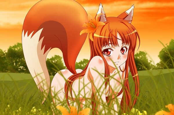 anime girl wolf horo wolf and spice view us