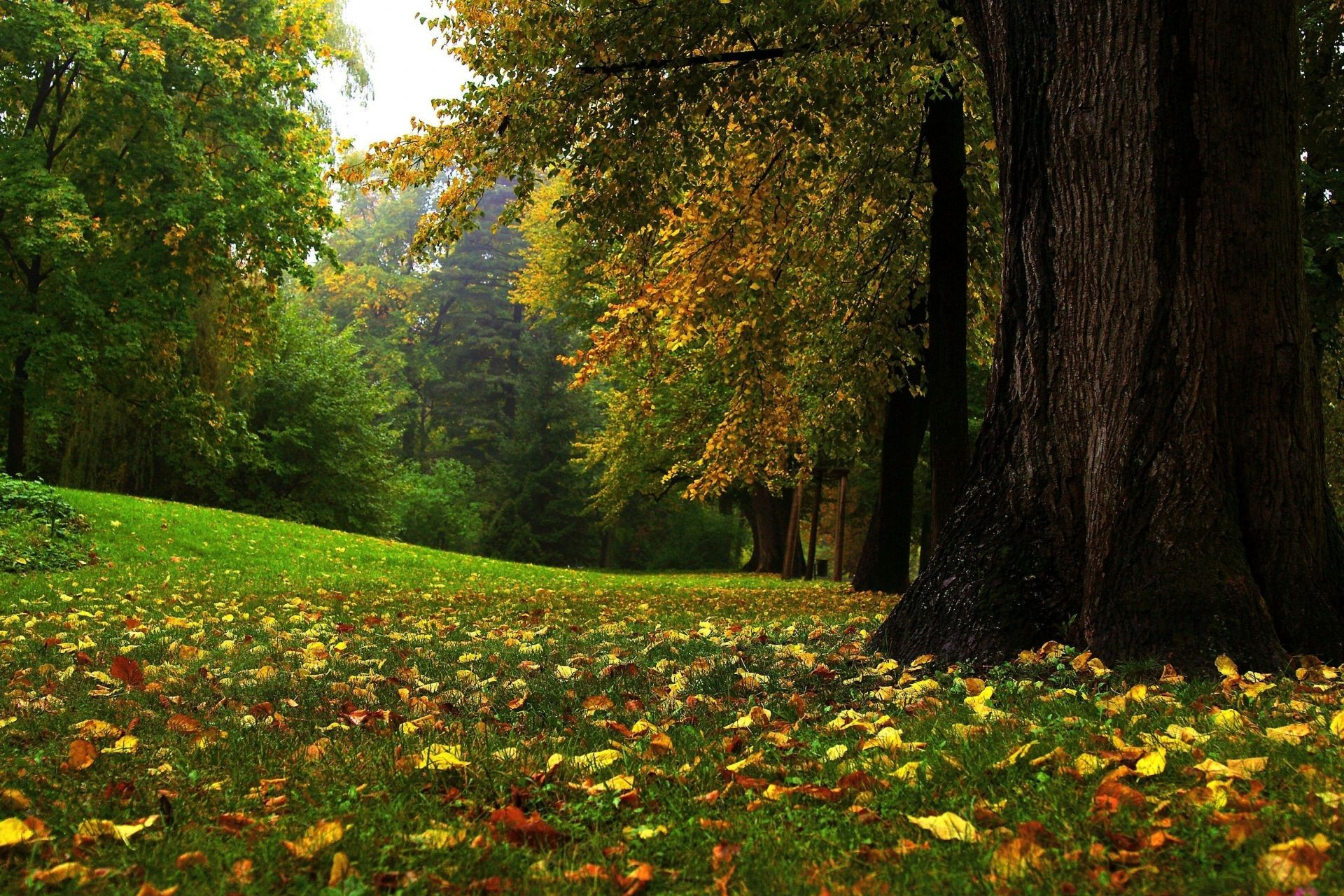 leaves tree wood leaf park landscape nature fall outdoors maple scenic environment fair weather