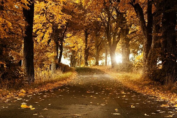 road autumn alley covered with yellow leaves Golden ILO