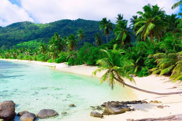 Beautiful Exotic Beach