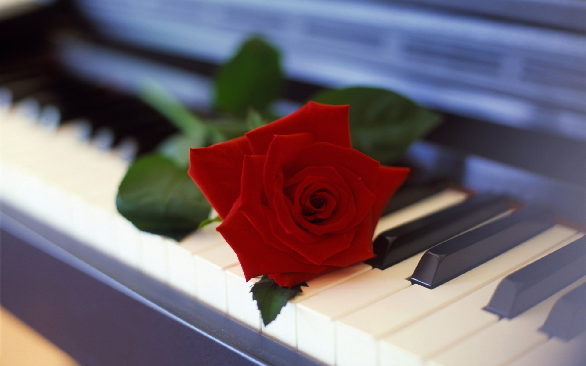 Flower Rose Piano Android Wallpapers For Free