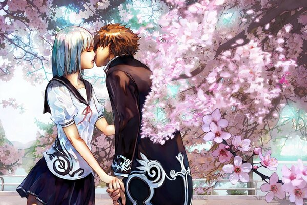 Cherry kiss cherry blossoms couple love kiss