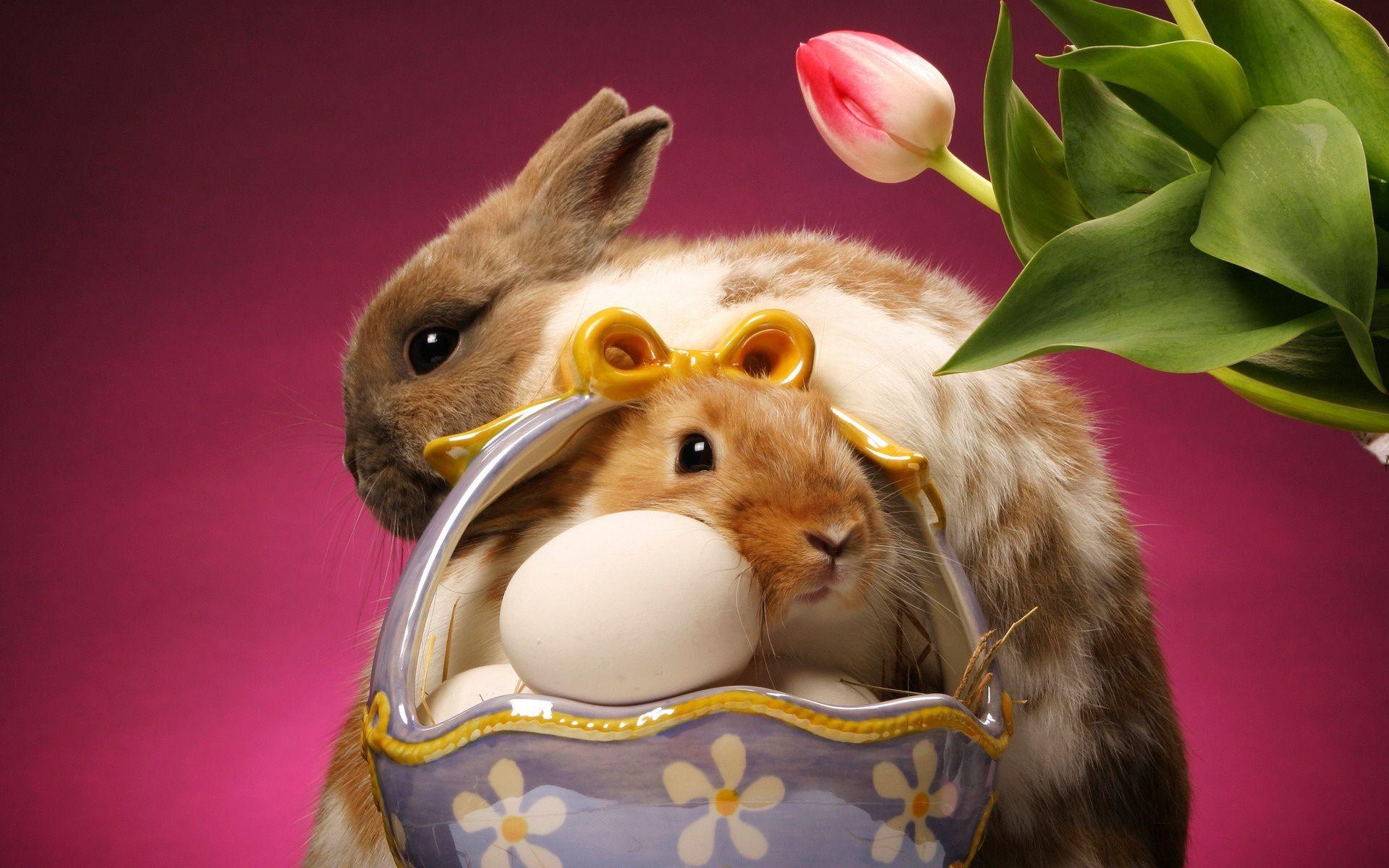 кролик с тюльпанами  № 1144627  скачать