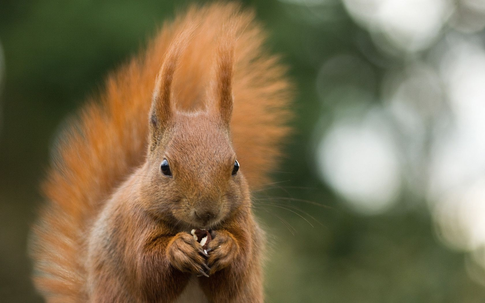 Squirrel animal nut chewing glare nature macro green