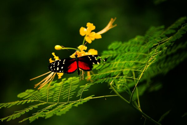 Beautiful Butterfly Alone
