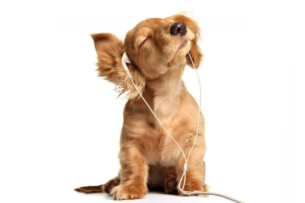 Dog puppy earphones ears baldeet