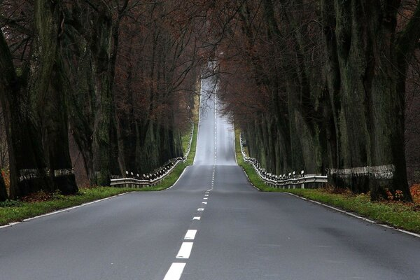 Landscapes road forest road trees pictures