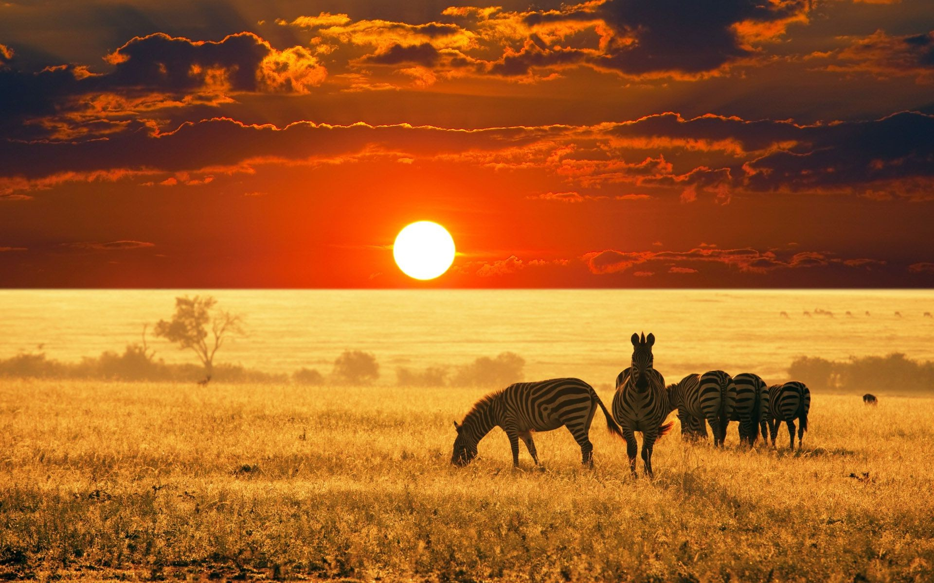 Zebras in Africa at the background of sunset