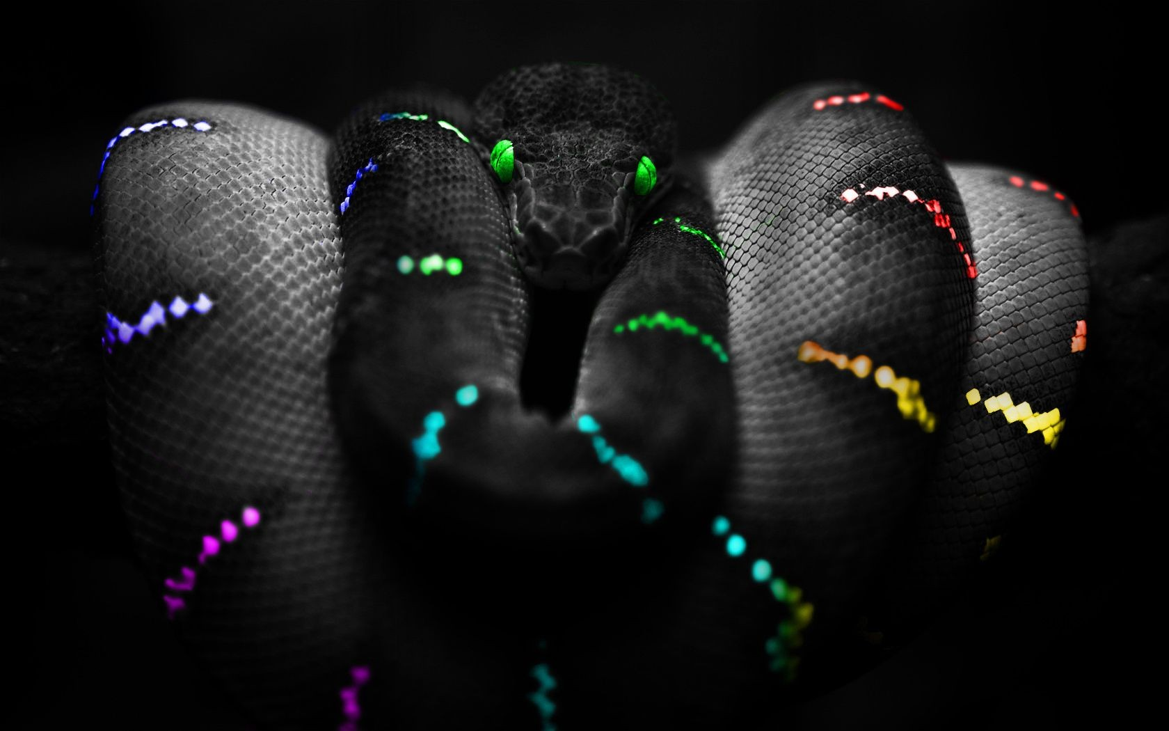Snake With Green Eyes On Black Background Android Wallpapers